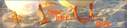 The Good Luck Duck Renters